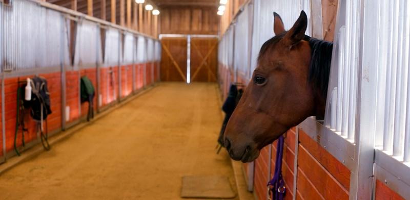 Paardensportaccommodatie geen onderdeel eigen woning